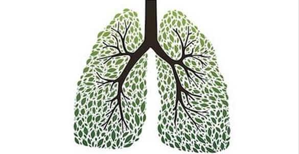 Lo sapevi che puoi smettere di fumare con alcune erbe? Ecco quali