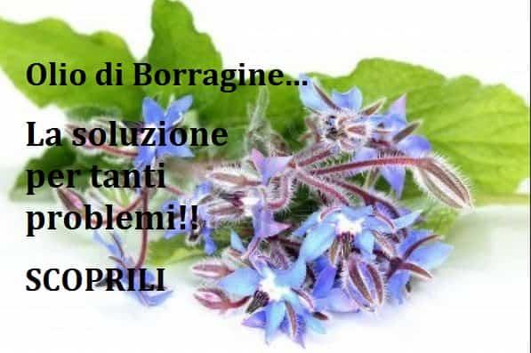 Olio di Borragine:tutti i Benefici.Contro colesterolo e psoriasi