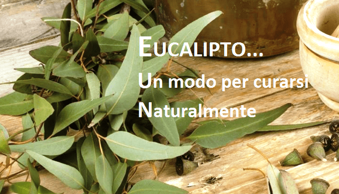 Olio essenziale di eucalipto:un surplus di benefici per la salute