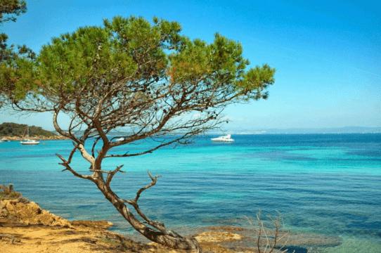 L'estratto di pino marittimo:una vera e propria aspirina naturale
