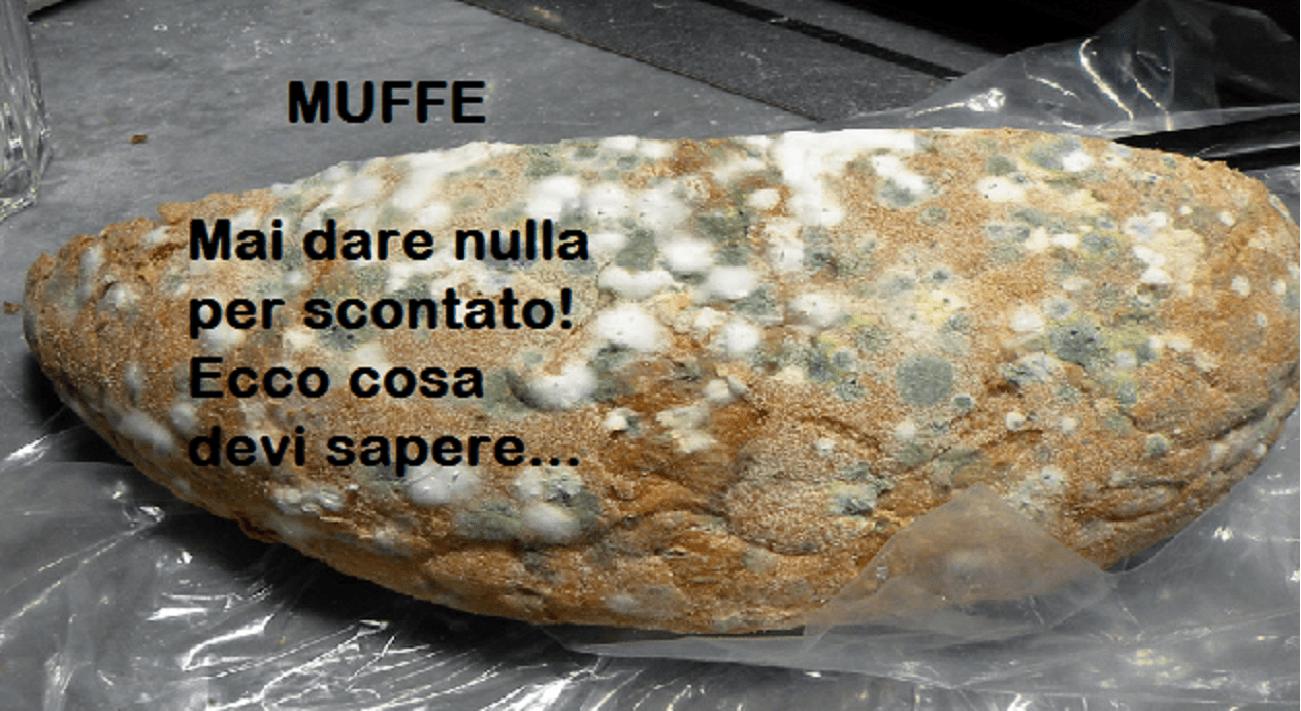 Muffa alimentare