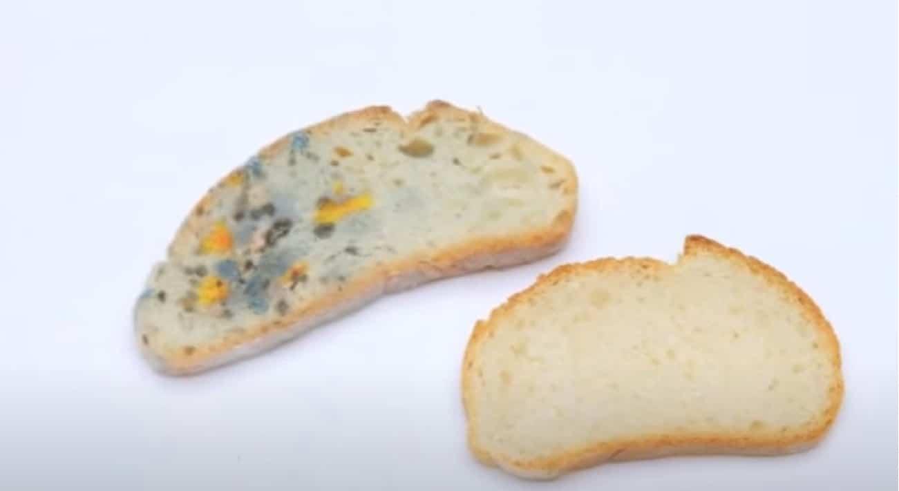 Muffa del pane