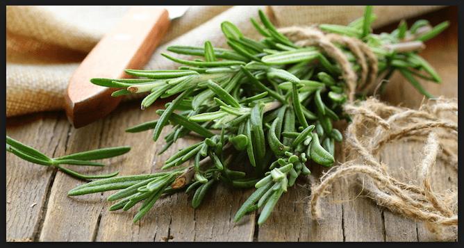 I benefici del rosmarino.Una pianta terapeutica e curativa