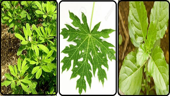 Ecco le tre piante che combattono attivamente il DIABETE ma non solo...Scoprile