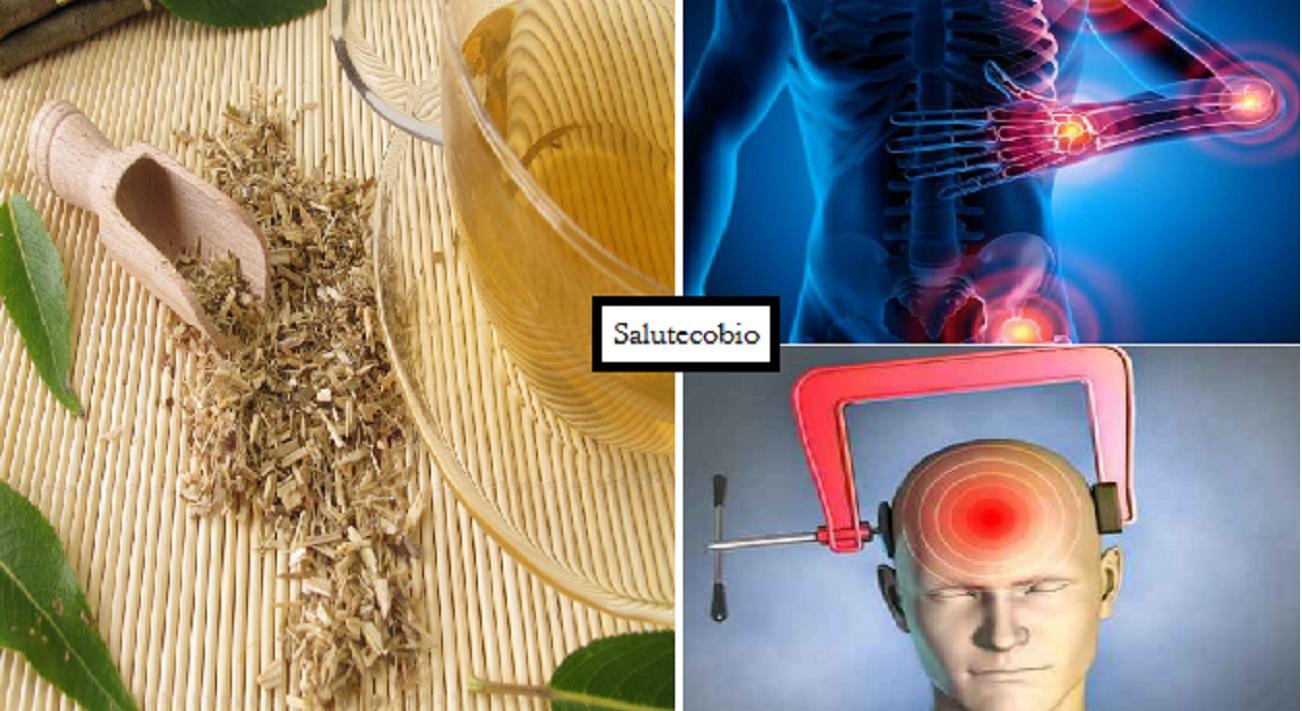 corteccia salice bianco infuso e proprietà terapeutiche