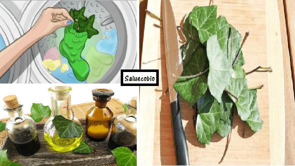 Per un bucato ecologico metti l'edera in lavatrice e vedrai