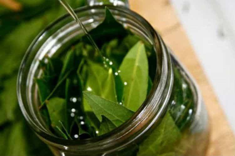 Abbinati così, olio d'oliva e alloro creano un potente unguento analgesico naturale