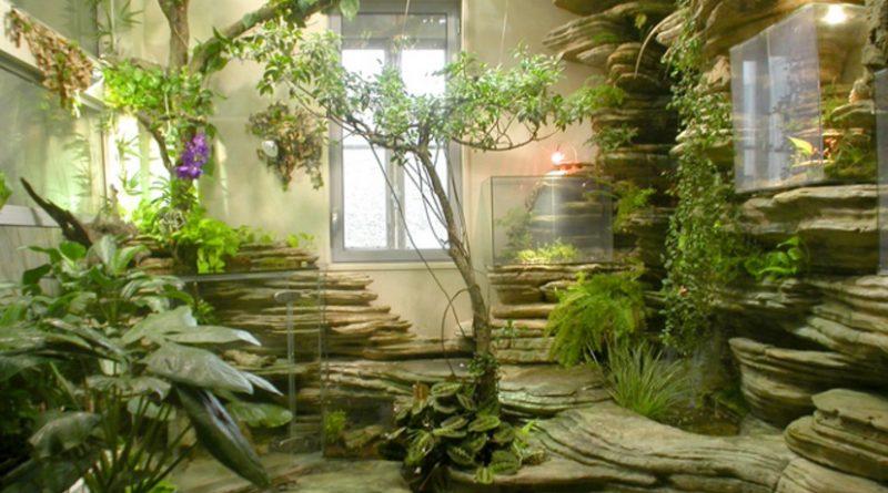 Le piante che in casa purificano l'aria e migliorano la vita