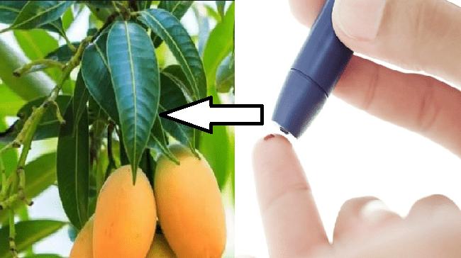 Combatti il diabete con le foglie di mango. Scopri come