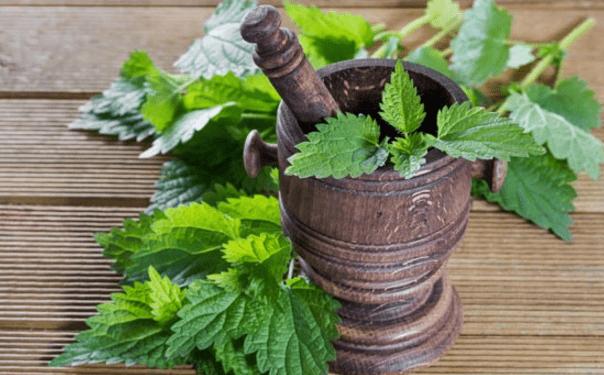 Ortica: proprietà, benefici e usi di questa pianta medicinale