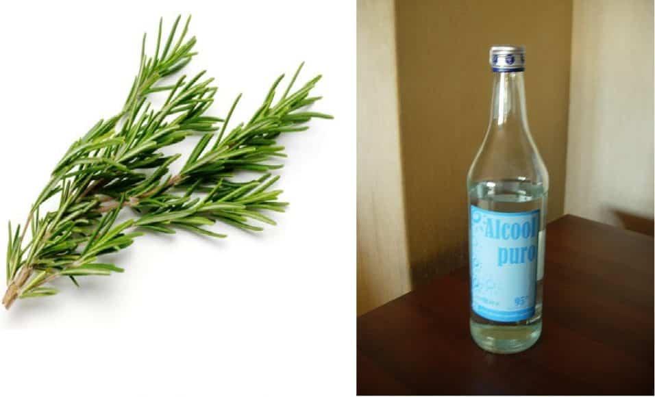 Alcol di rosmarino per eliminare cellulite e vene varicose