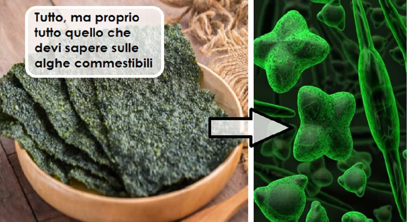 Alghe brucia grassi, alga nori