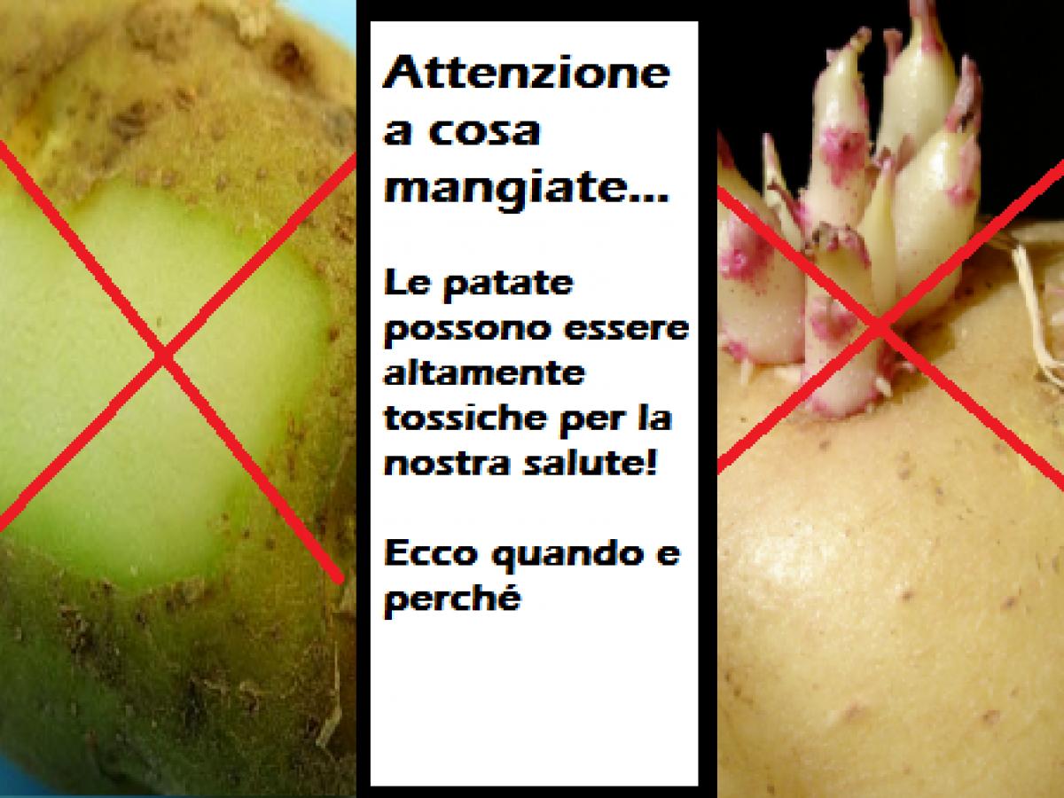 Attenzione Alle Patate Con Buccia Verde O Germogli Sono Tossiche