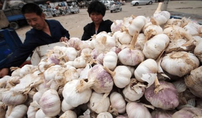 Aglio cinese pieno di candeggina e pesticidi.Come riconoscerlo