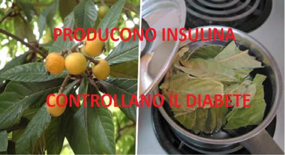 Nespole e diabete