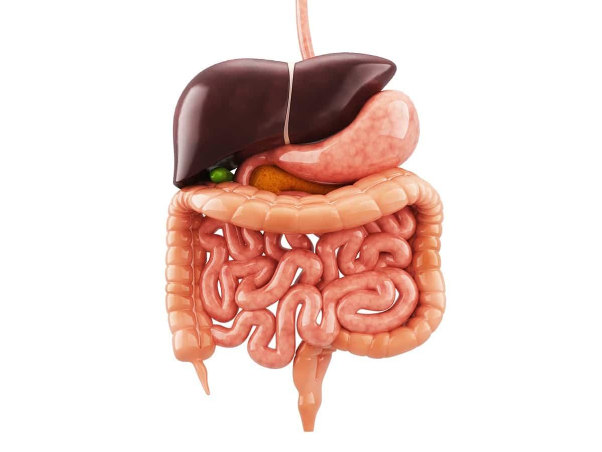organi apparato digerente acqua calda
