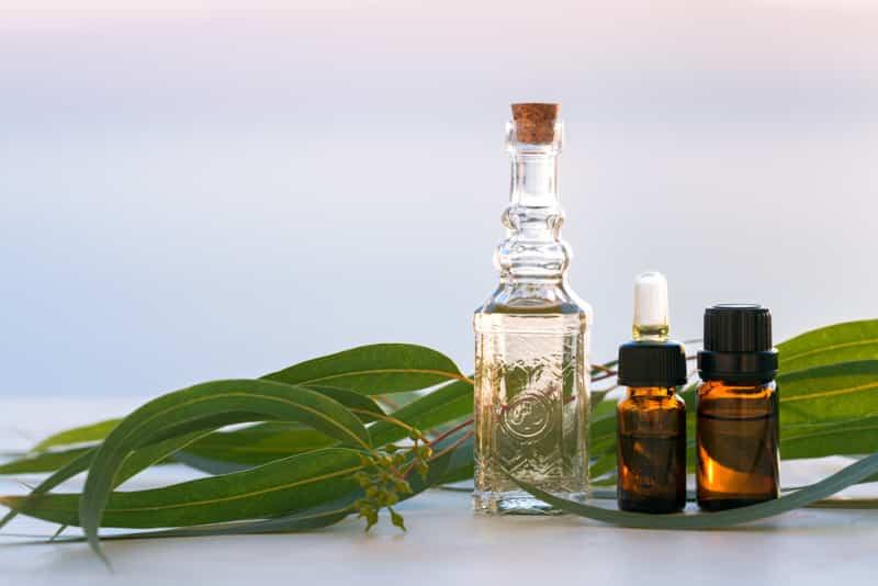 olio di eucalipto retrazione gengivale