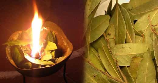 Ansia e stress un efficiente rimedio millenario a base di alloro aromaterapia