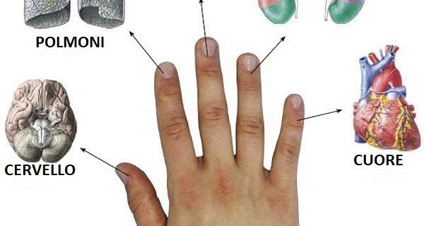 Jin Shin Jitsu ogni dito è connesso a 2 organi