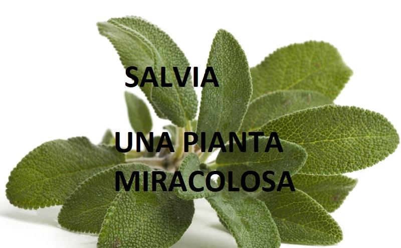 Salvia:benefici ed usi comuni di questa pianta miracolosa