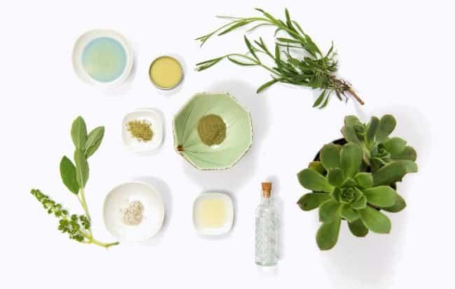 Le 10 migliori erbe per aumentare le tue difese immunitarie