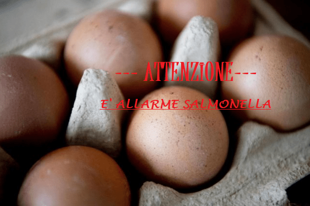 Salmonella nelle uova
