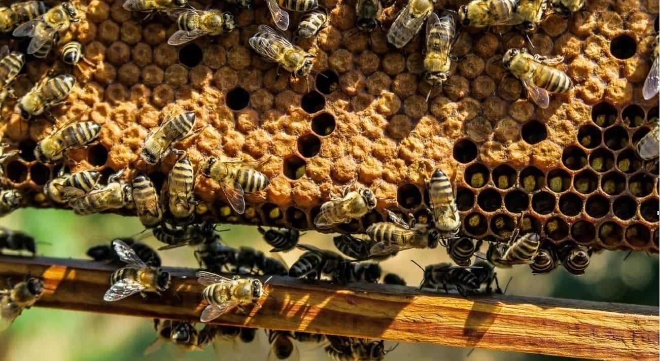 Cera d'api dove si compra e usi in cosmetica