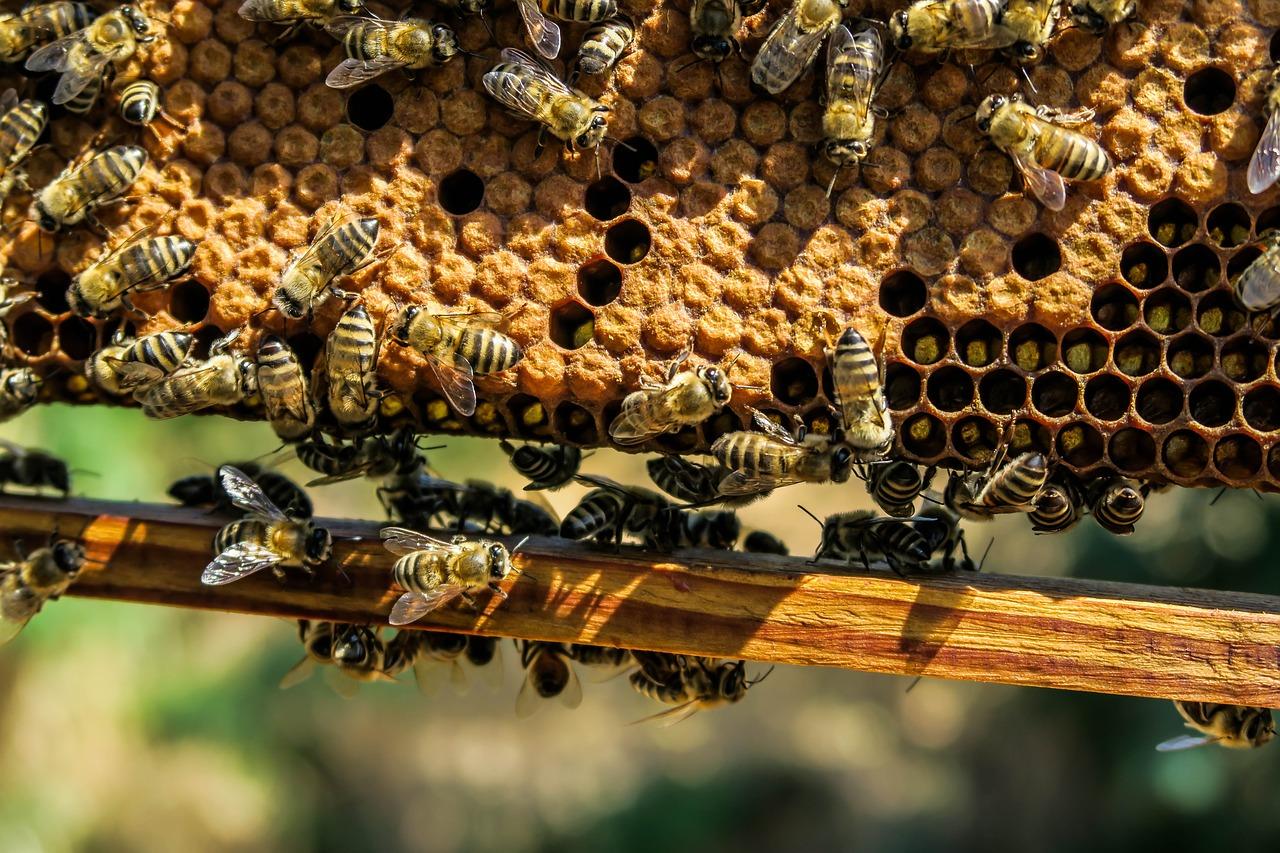 Tutto sulla cera d'api: proprietà, usi cosmetici, farmacologici e domestici. Ecco dove si trova