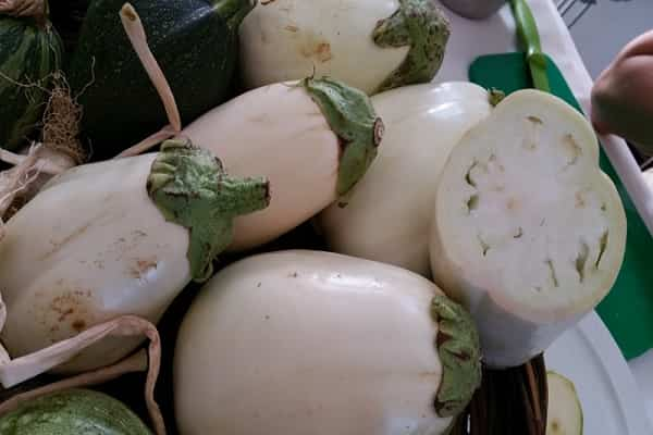 Alla scoperta della melanzana bianca. Come cucinarla ed utilizzarla in cucina