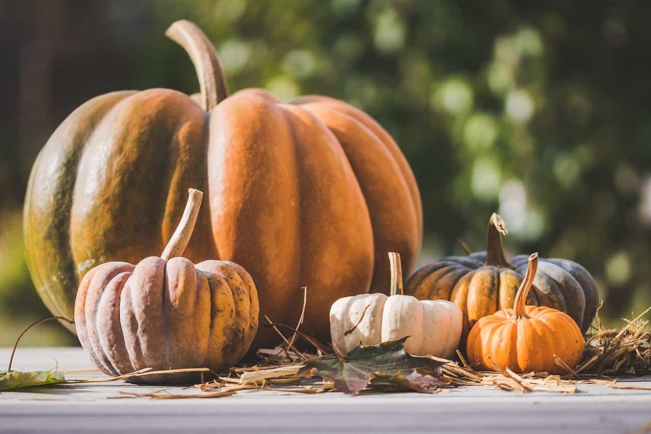La zucca: ortaggio alleato della salute, ricco di benefici e proprietà