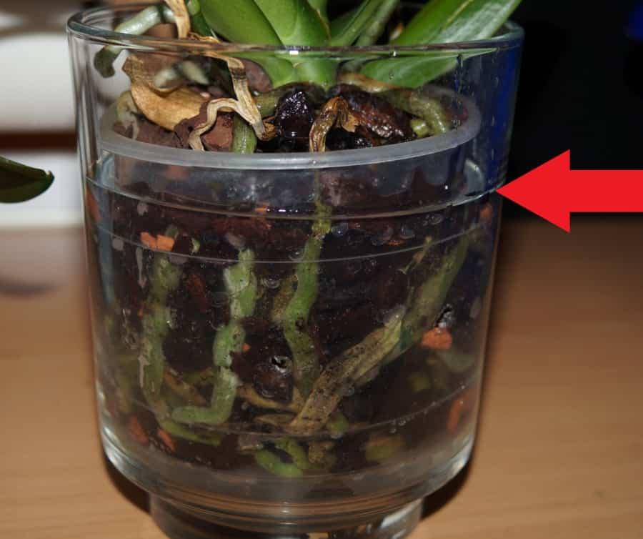 innaffiare le orchidee