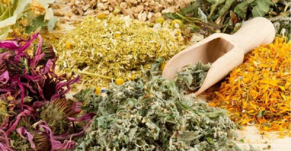 erbe antivirali piante