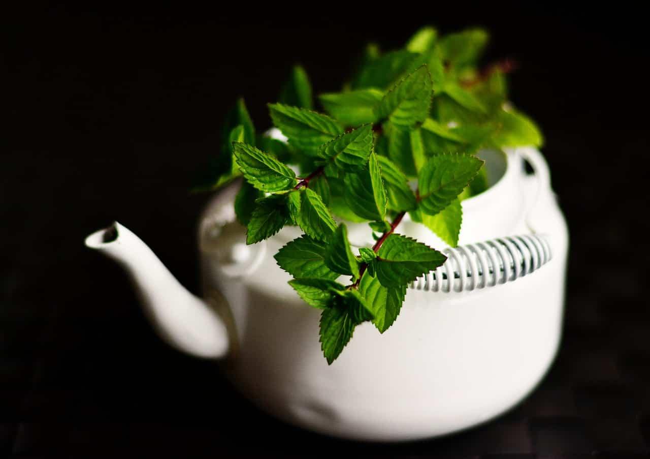 5 piante che allontanano Zanzare e Mosche da casa
