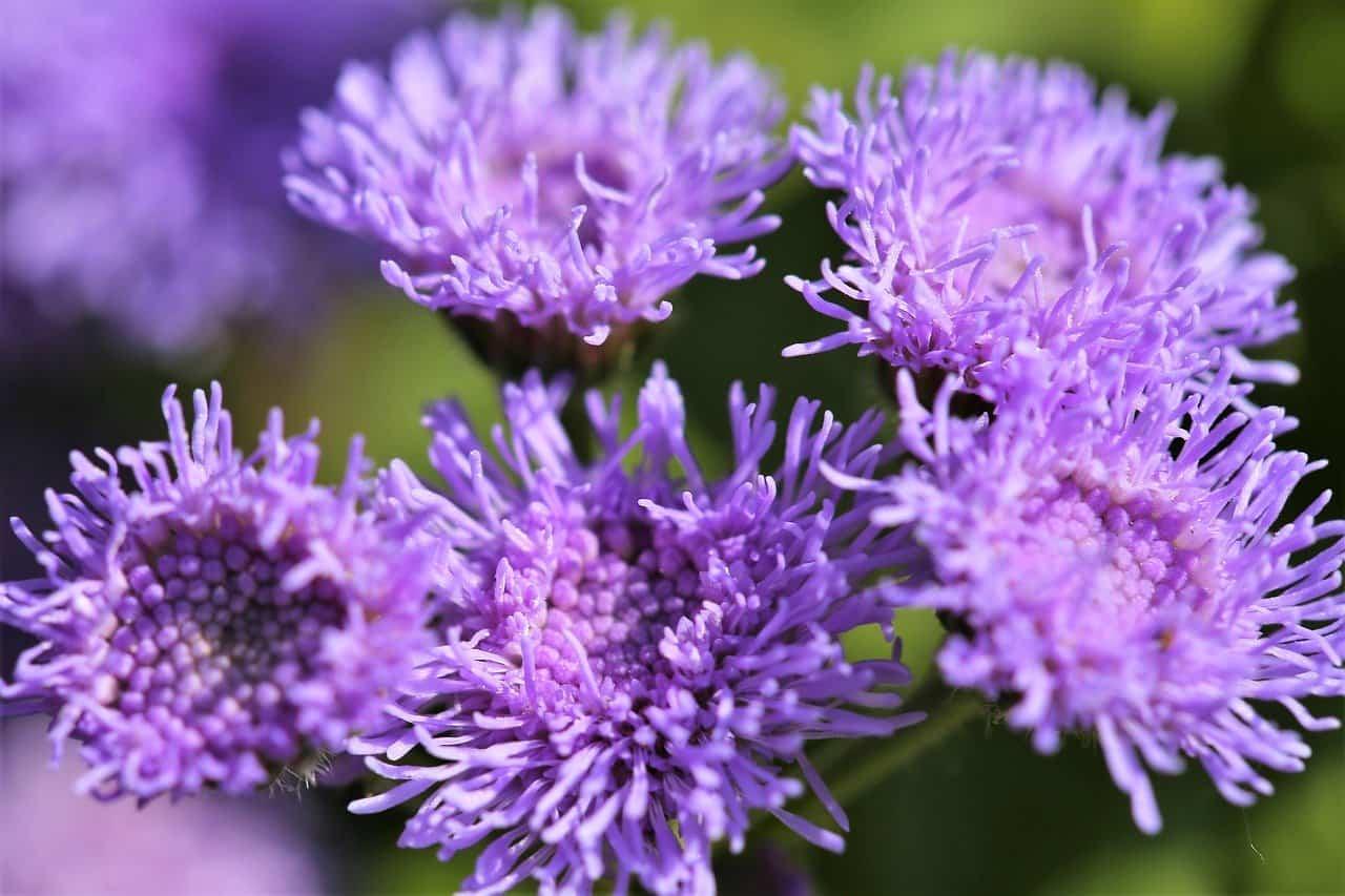 fiori di filo interdentale