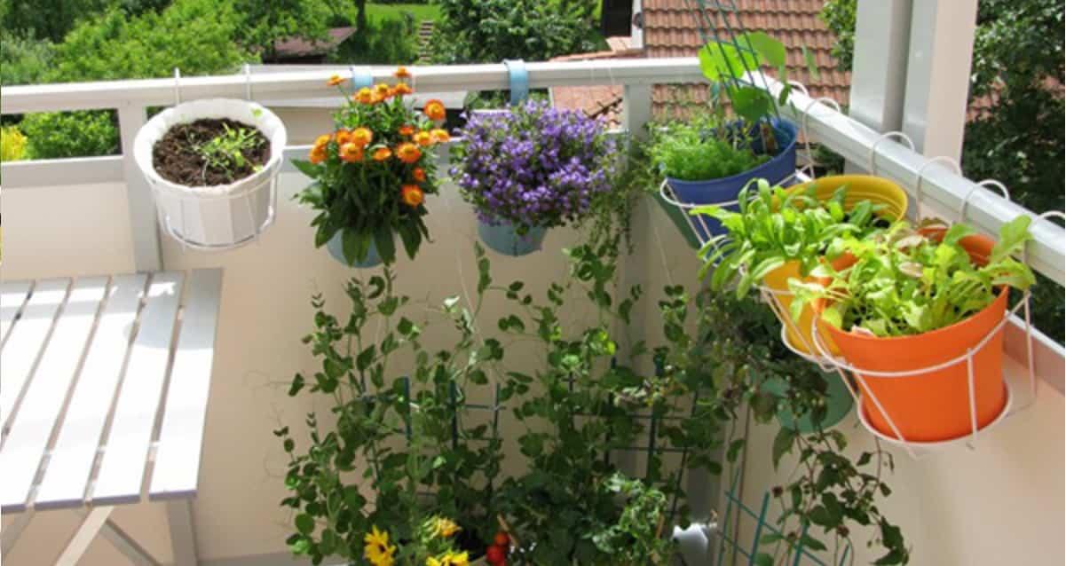 Le piante repellenti anti zanzare per il tuo balcone