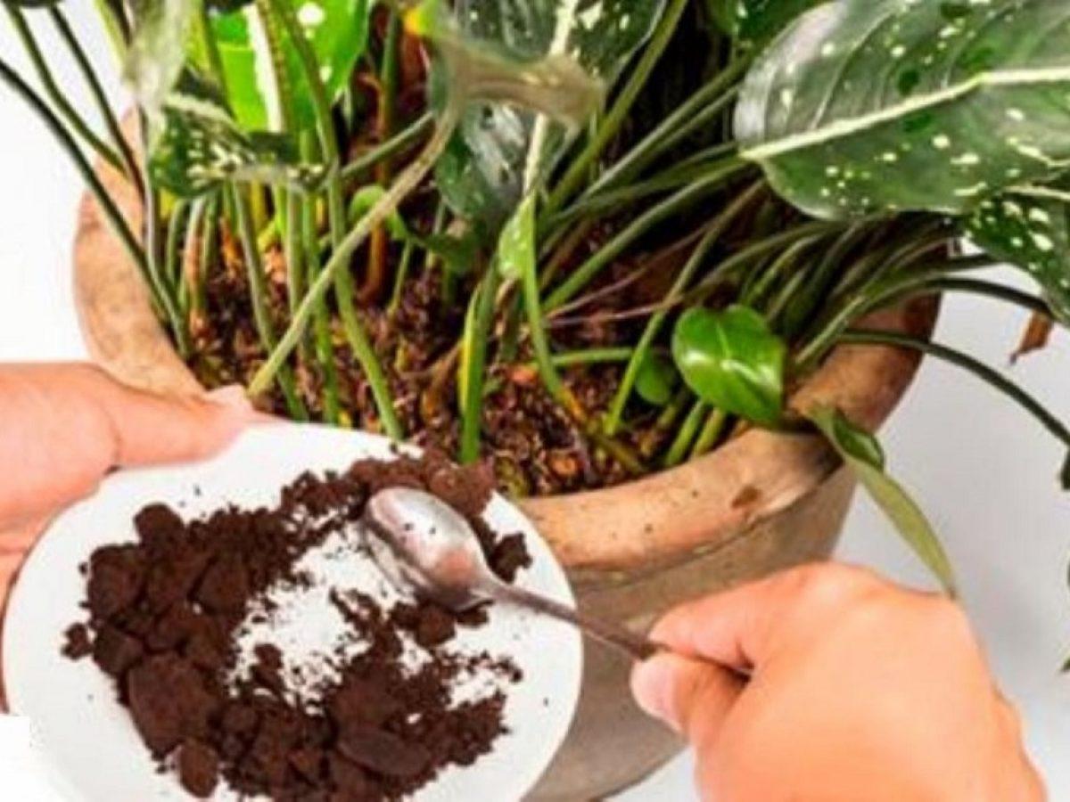 Come Fare Un Fertilizzante Naturale Fai Da Te Per Le Tue Piante
