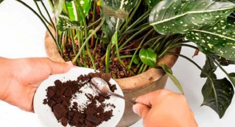 fertilizzante naturale per le piante