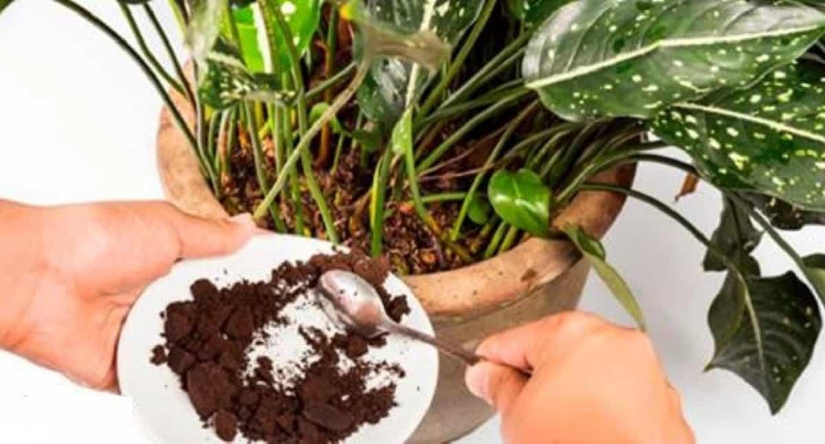 Come fare un fertilizzante naturale fai da te per curare le tue piante