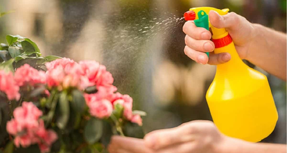 Come realizzare degli insetticidi naturali potenti ed efficaci
