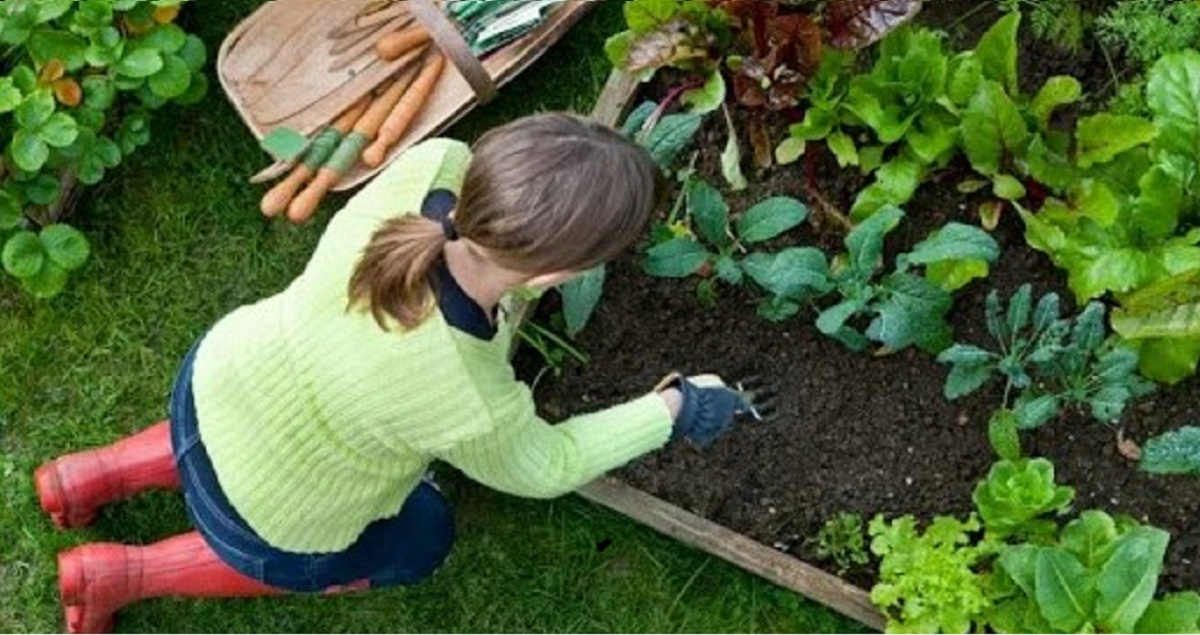 orto cosa piantare a luglio