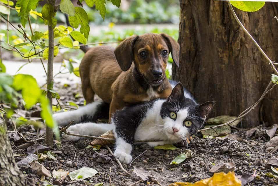 anticorpi covid-19 cani e gatti