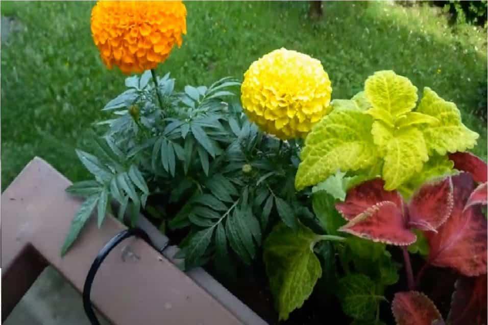 Fiori da piantare a marzo sul balcone