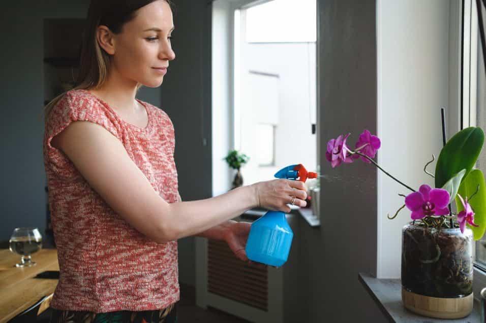 Donna che concima orchidea in casa